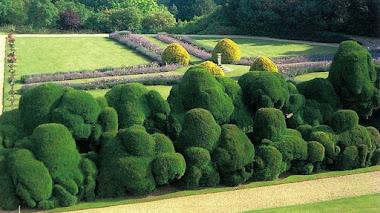 'Elephant Hedge' topiaria con 450 años en Rockingham Castle