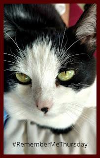 Logan's cat, Sadie.