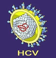 obat gamat hepatitis c