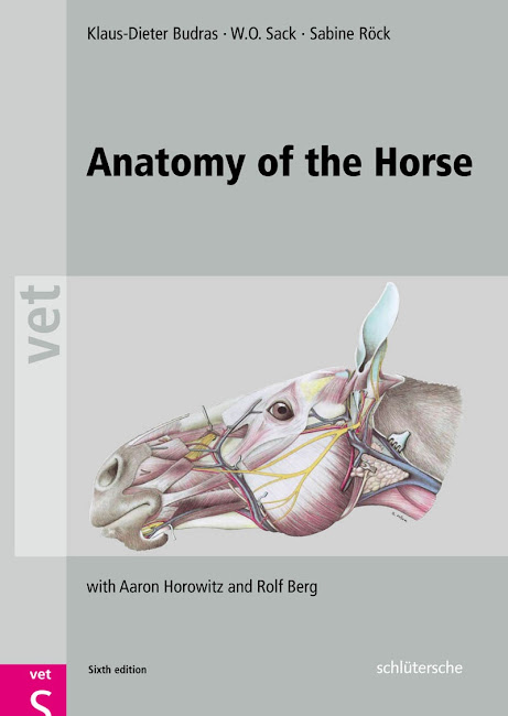 Anatomy of the Horse 6th Edition