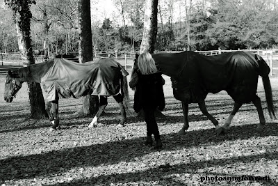 horses and woman photo