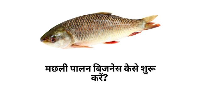 मछली पालन बिजनेस कैसे शुरू करें?