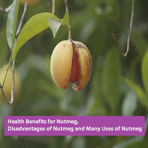 benefits of nutmeg oil on skin, benefits of nutmeg for hair, benefits of nutmeg in hindi, health benefits of nutmeg, health benefits of nutmeg and cinnamon, benefits and side effects of nutmeg, benefits and uses of nutmeg,
