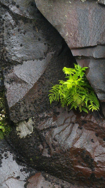 wet rock and fern