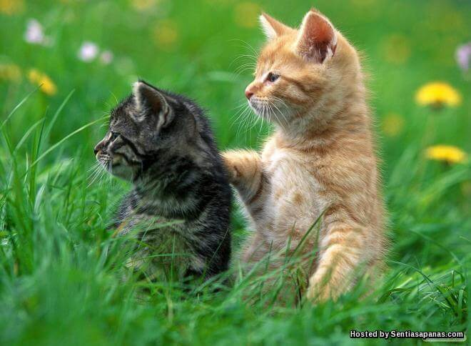 Benarkah Kucing Memiliki 9 Nyawa