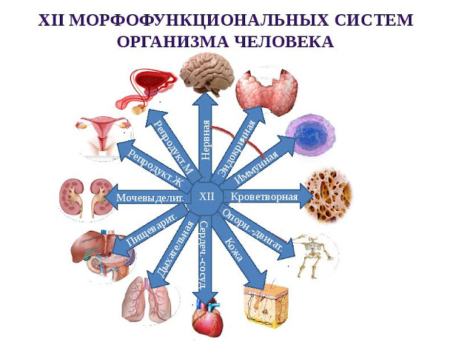 Диагностика заболеваний человека самостоятельно