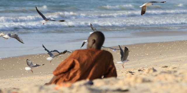 Tourisme, zone, fleuve, paysage, environnement, Langue, Barbarie, animaux, oiseaux, parcs, LEUKSENEGAL, Dakar, Sénégal, Afrique