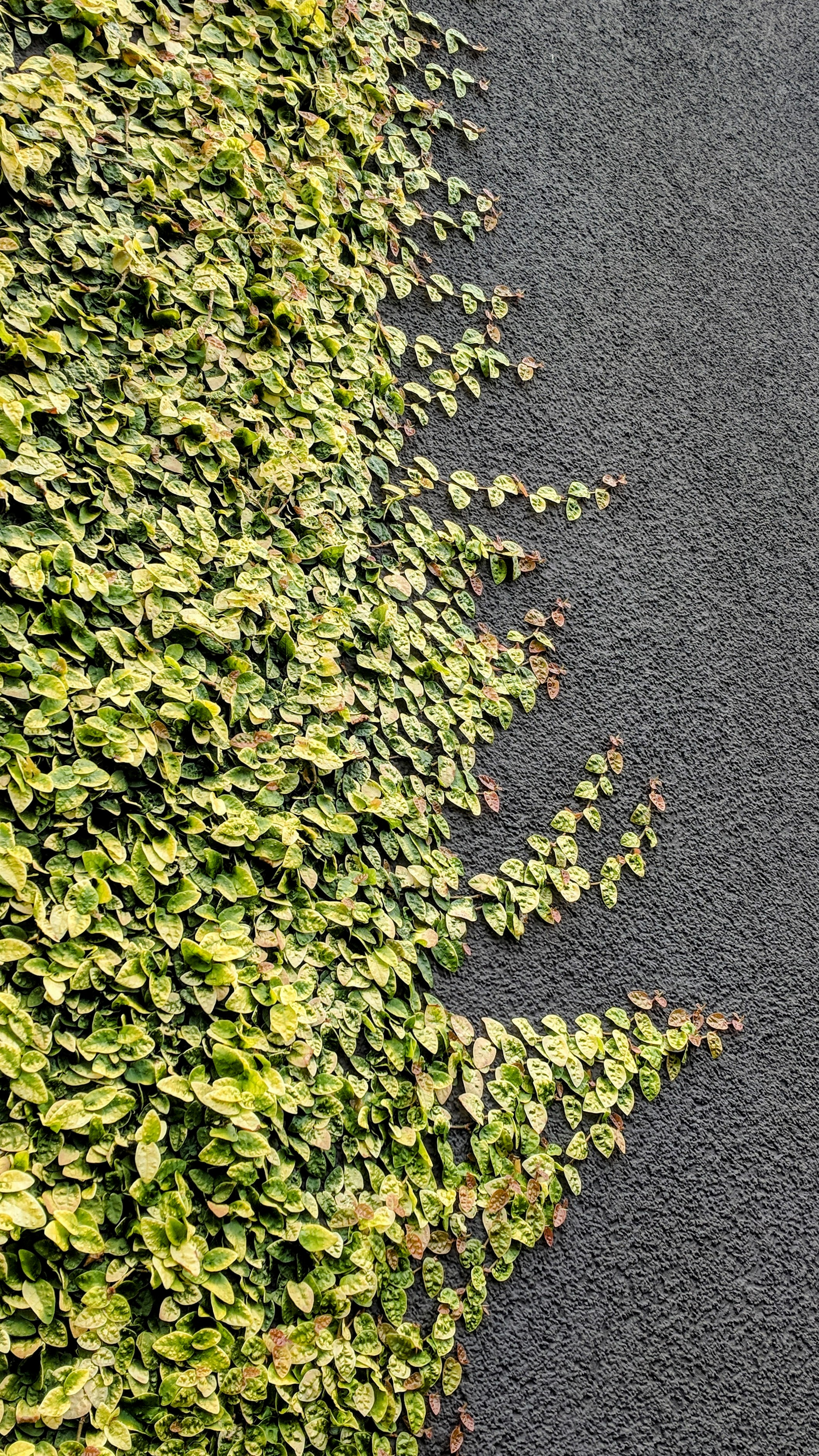 Green plant on grey wall