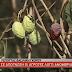 Θεσπρωτία:Σε απόγνωση οι αγρότες λόγω ανομβρίας