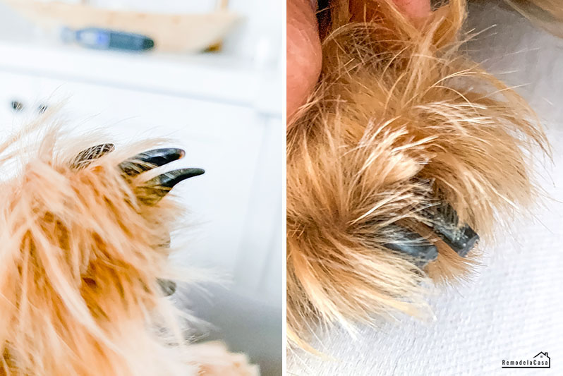 how to trim dog's nails with Dremel PawControl