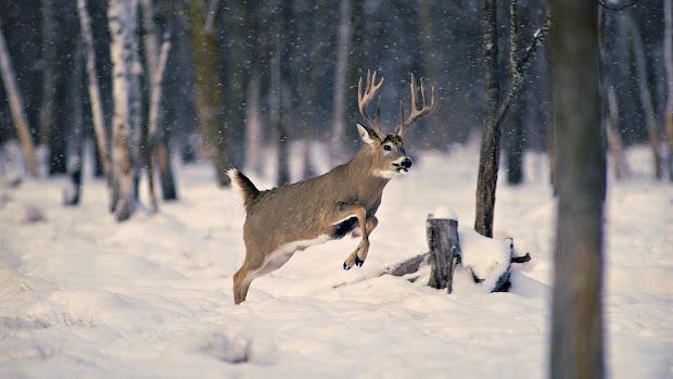 Winter with Deer