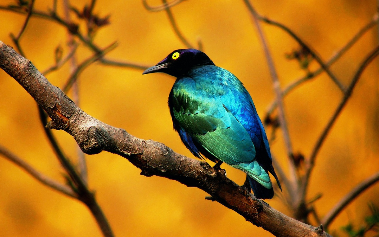 Bird On Tree High Quality HD Wallpaper