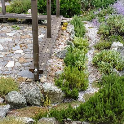 succulent and sedum garden bed