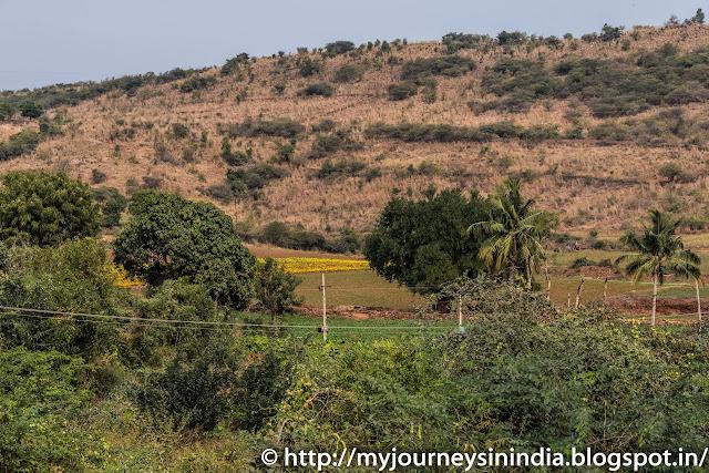 Marigold Field Andhra