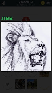 Изображение рисунка в карандаше, голова крупного льва