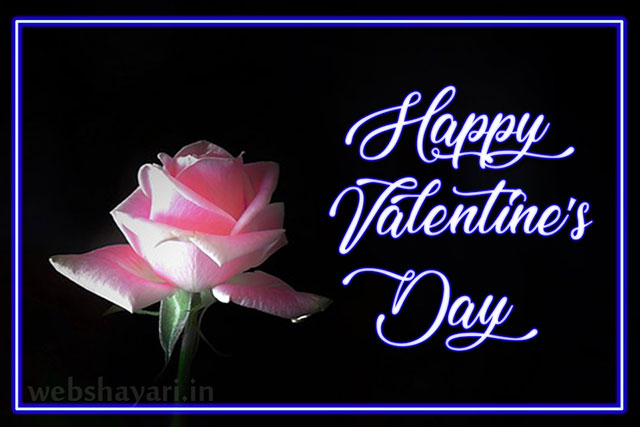pink  rose happy valentines day hd
