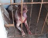 Assaltante é atacado por cão após invadir casa na PB