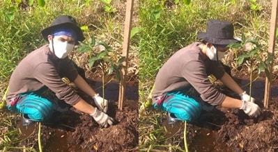 Adapun jenis-jenis sistem silvikultur yang pernah diterapkan di Indonesia adalah sebagai berikut (Wahyudi, 2013): 1. TPI 2. TPTI 3. THPA 4. THPB