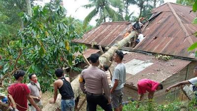 Angin Kencang Melanda 50 Kota,  Ada Bangunan Warga Tertimpa Pohon