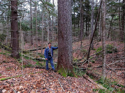 Ray Asselin at a large Black Cherry, Monroe State Forest