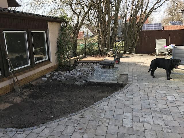 der Hund begutachtet den Baufortschritt (c) by Joachim Wenk