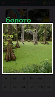 655 слов страшное зеленое болото с корягами 11 уровень