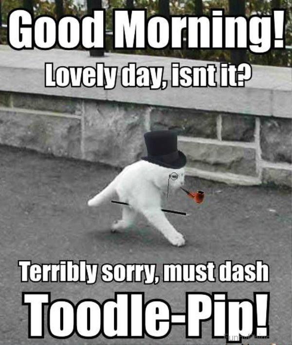 lovely day memes