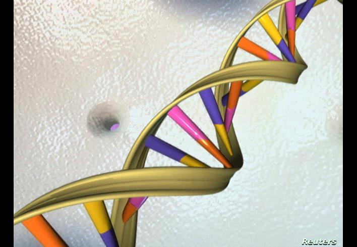Una doble hélice de ADN es vista en una ilustración de un artista no identificado por el Instituto Nacional de Investigación del Genoma Humano el 15 de mayo de 2012 / REUTERS