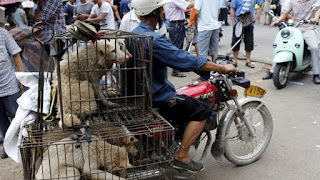 Cresce la protesta in Cina per il Dog Day
