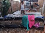 Inspiratif, Pemuda Dompu Budidaya Jamur Manfaatkan Limbah Tongkol Jagung