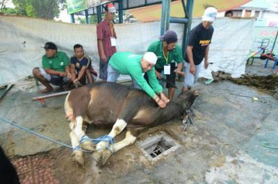 Bupati Anas Idul Adha Perkuat Budaya Gotong Royong