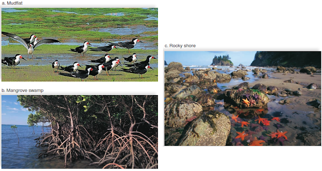 FIGURE 1 Coastal ecosystems. a. Mudflats are frequented by migrant birds. b. Mangrove swamps skirt the coastlines of many tropical and subtropical lands. c. Some organisms of a rocky coast live in tidal pools.
