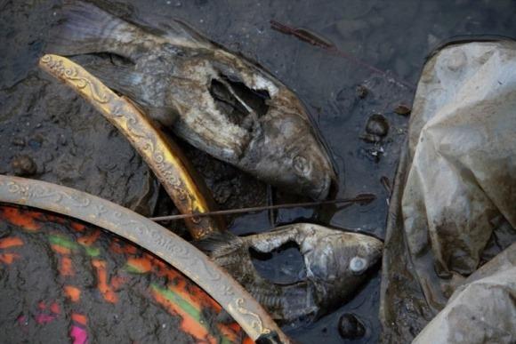 Việt Nam: Khi nước 'quá ít, quá nhiều và quá bẩn'
