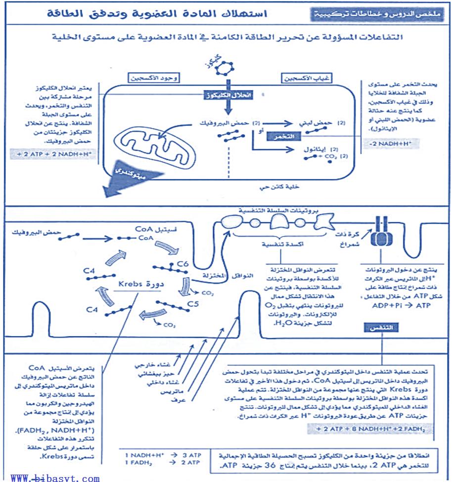 ملخص درس استهلاك المادة العضوية للثانية باكلوريا