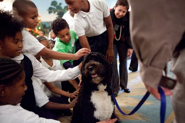 Murió Bo, el perro de los Obama