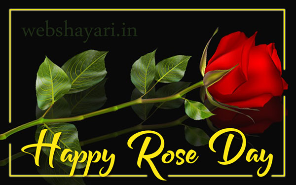 whatsapp status rose day