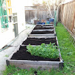 My Bay Area Garden: What a load of..compost!