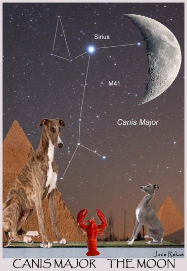 Sirius Starseeds: Canis Major | Fixed Stars