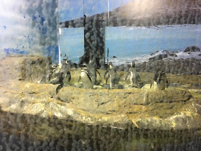 santos aquário - pinguins