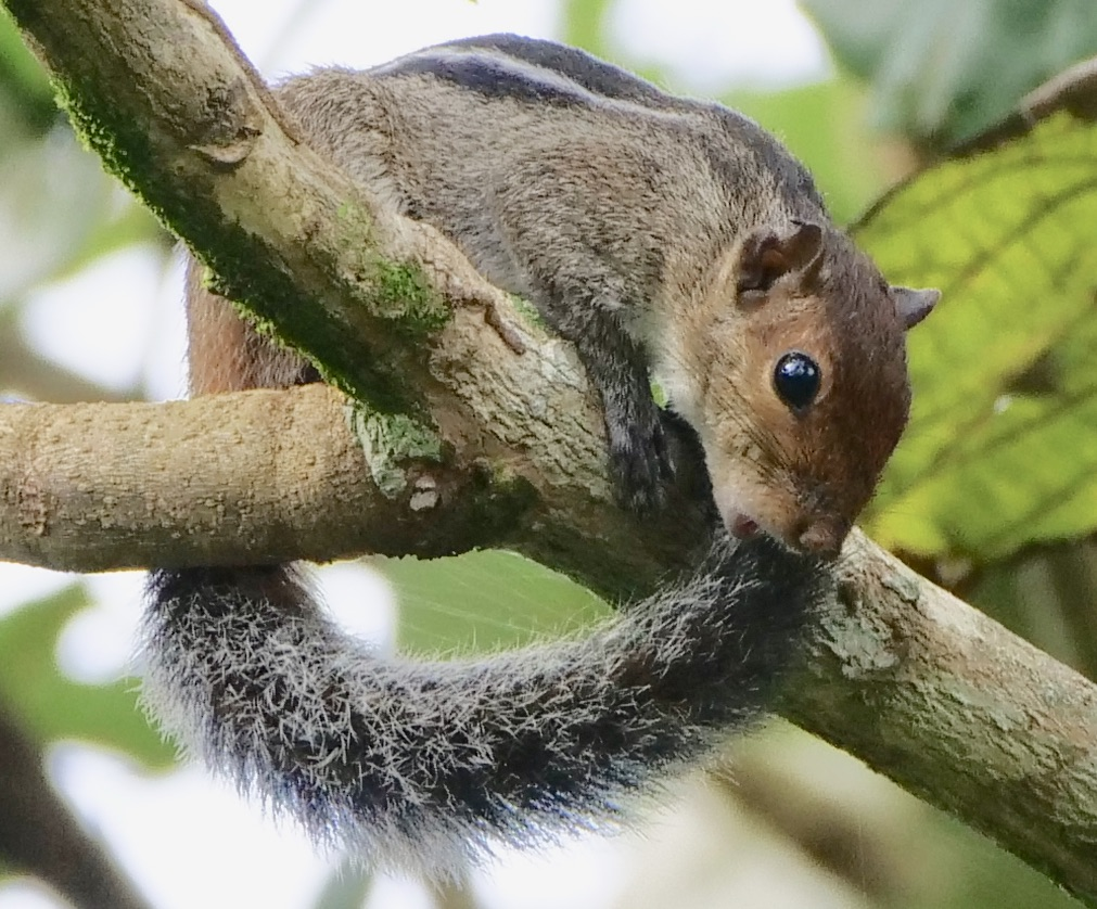 Waymarks on a Journey: A whistling squirrel