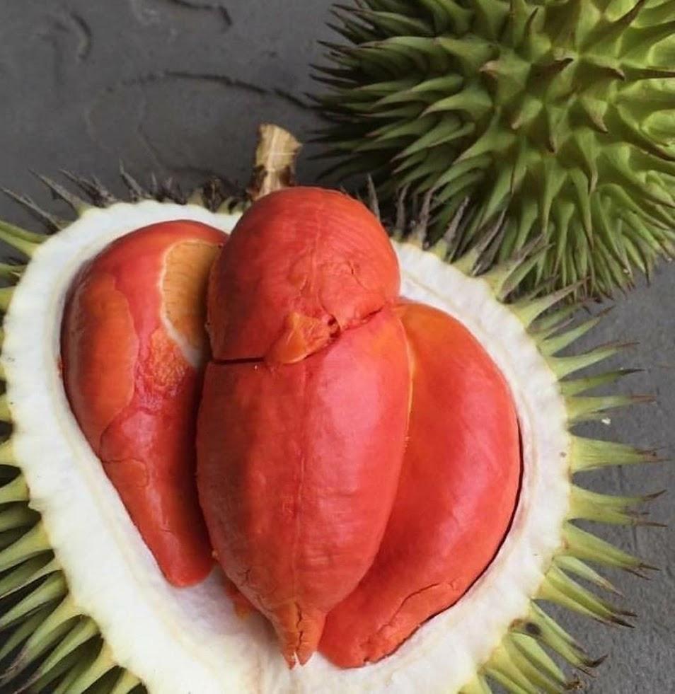 bibit durian merah manis Banda Aceh