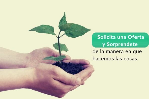 ECO SEO Agencia de marketing que planta arboles para tu empresa