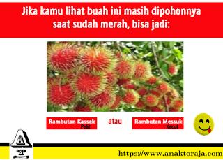 Kata-kata Sindiran Toraja - Meme Anak Toraja