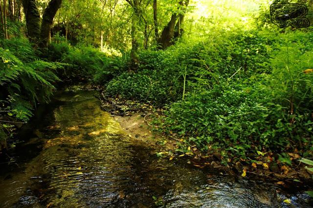 Bosque Encantado Galicia. Rio Orxas