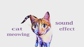 cat sound images