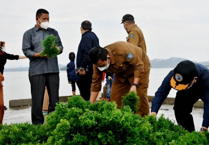 Panen Rumput Laut di Karimun, Berikut Harapan Gubernur Kepri