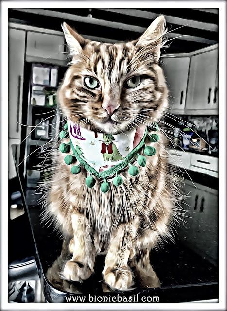 Fudge's Festive Selfie ©BionicBasil® Caturday Art Hop