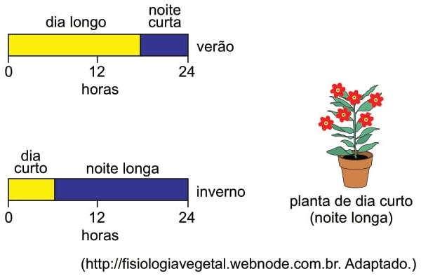 A figura ilustra o florescimento de uma planta que necessita de um fotoperíodo crítico de 6 horas, no máximo
