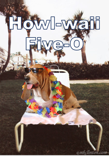 Basset Hound with Hawaiian lei