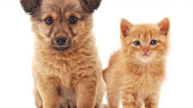 Quer adotar um um cachorrinho ou gatinho?
